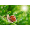 Пенка для умывания с муцином улитки BIOAQUA Snail Repair & Brightening, 100 г