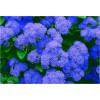 """Пигмент """"Агератум"""" MixCosmetic радужный синий сатин 6046."""