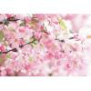 """Пигмент """"Яблоневый цвет"""" MixCosmetic белый с розовым сатин 7222."""