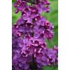 """Пигмент """"Сирень"""" MixCosmetic фиолетовый сатин 6030."""